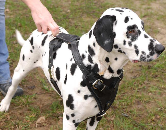 انواع الكلاب اسعارها معلوماتها